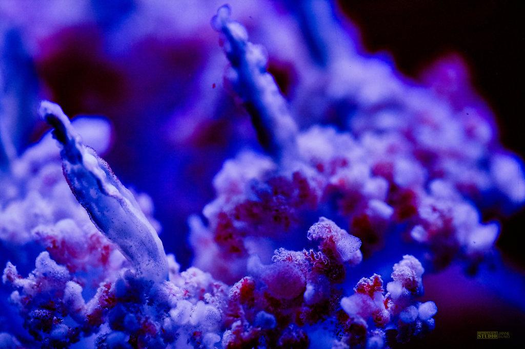 Jelly-Fish-Detail.jpg