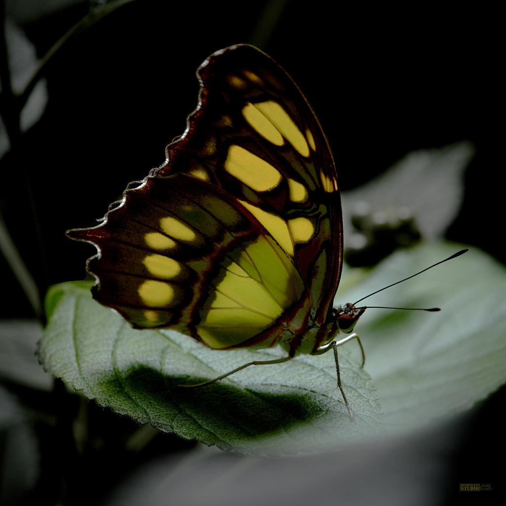 Butterfly-Yellow.jpg